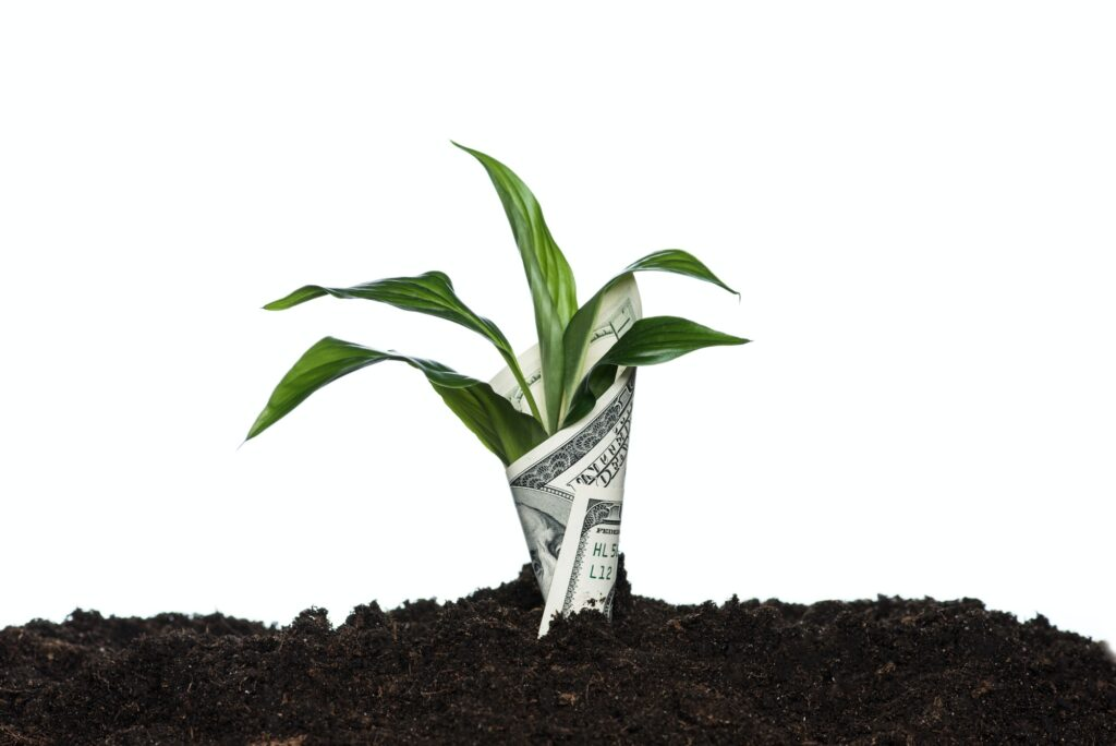 plant covered with dollar banknote isolated on white, investment concept